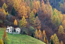 Дома по осени считают: 11 домов, где наблюдать листопад