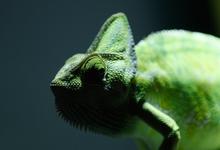Стать хамелеоном: пять способностей, которые точно понадобятся в будущем