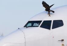 Небо, санкции, шантаж. Американским авиакомпаниям разрешили полгода летать над Россией
