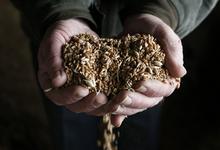 Климатическое проклятие. России не хватит зерна из-за плохой погоды