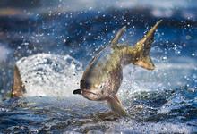 Рыба на углях. Новый порт угрожает природе Камчатки