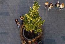 Дерево или машина. Почему жители городов воспринимают благоустройство в штыки