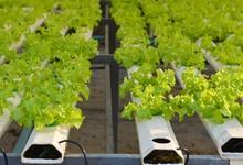 Российский стартап привлек $1 млн на выращивание овощей с помощью искусственного интеллекта