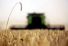 Обогнать СССР.  Россия бьет 40-летний рекорд по сбору зерна