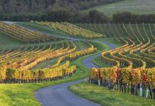 Как австрийские виноделы создают новую категорию вин