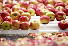 Плоды и санкции: Россия запретила ввоз яблок из Белоруссии
