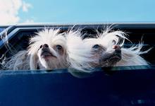 Дом на колесах. Стартап придумал, как перевозить собак в багажнике