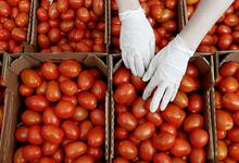 Конец томатной войны: в Россию поступила первая партия запрещенных овощей из Турции