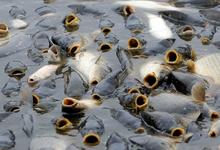 Богатый улов. Рыба в 2018 году подорожает на 10-15%