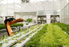 Робот в огороде. Как обойтись без людей в сельском хозяйстве