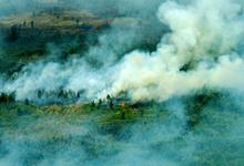 Гори ясно: как сколотить миллиардное состояние на лесных пожарах