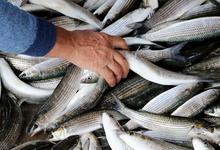 Лишняя рыба. Миллион тонн улова ежегодно выбрасывается за борт
