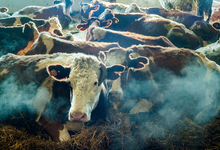 Эмбарго на бумаге: Россия отложила запрет на ввоз молока из Белоруссии