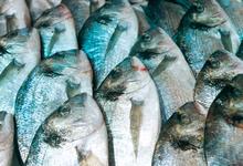 Московские сезоны. Как на ярмарках рыба уплывает в премиум-сегмент