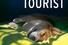 Энн Тайлер, «Случайный турист»