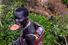 Сури (Эфиопия)