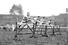 VII летние Олимпийские игры (1920 год, Антверпен)