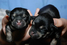 Клонированные щенки