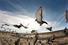 Гонки спортивных голубей (разные районы Тайваня)
