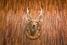 Зал переговоров с оленями и мамонтами