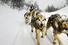Езда на собачьих упряжках, Россия, Камчатка