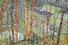 Питер Дойг «Дом архитектора в лощине» — $11,9 млн