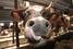 Свинарники, коровники и артезианская скважина