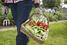 Самостоятельно выращивайте овощи и зелень