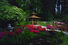 Irish National Stud & Japanese Gardens (Килдэр, Ирландия)