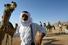 Гонки верблюдов (Дубай, Объединенные Арабские Эмираты)