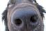 Искусственный нос