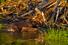 Природная дамба, построенная бобрами (национальный парк «Вуд Баффало», Канада)