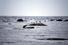 Белое море (поселок Нижняя Пулонга)