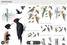 Приложение для распознавания птиц по изображению и голосу Collins Bird Guide