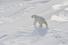 Фото-тур в Заполярье, Ямало-Ненецкий автономный округ