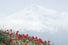 Арарат — 5165 м