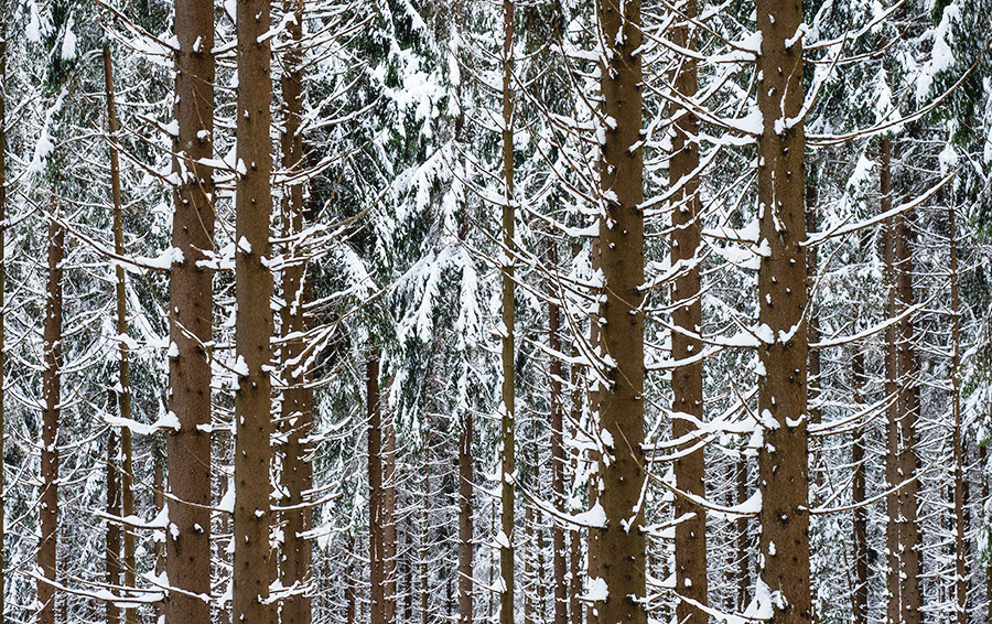 В самой «лесной» державе мира закончился лес. Как это исправить?