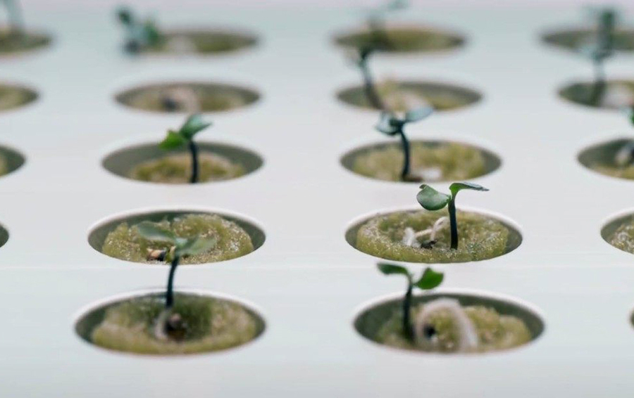 Клубничные берега: умные агротехнологии становятся «домашними»