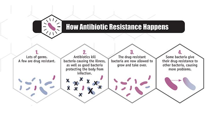 Один из путей возникновения АБР. После воздействия антибиотиков выживают бактерии, которые при мутациях получили стойкость к лекарству. Дальше они беспрепятственно размножаются. При этом методом горизонтального переноса генов, они могут передать генетический материал, влекущий невосприимчивость к антибиотикам другим бактериям