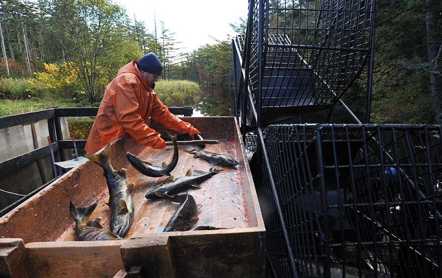 За сутки завод мог переработать 500 т рыбы