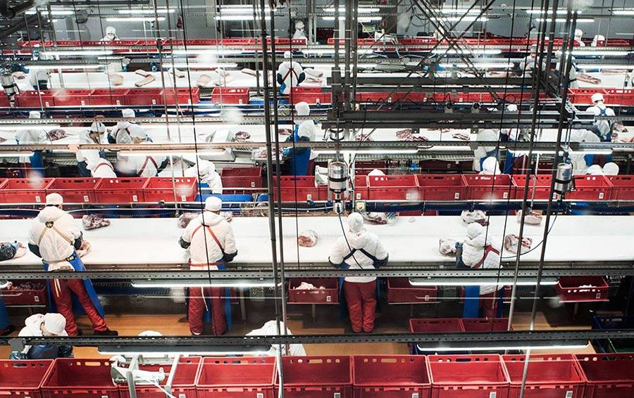 Средняя зарплата на конвейере по обработке мяса в «Агро-Белогорье» составляет 30 000 рублей в месяц.