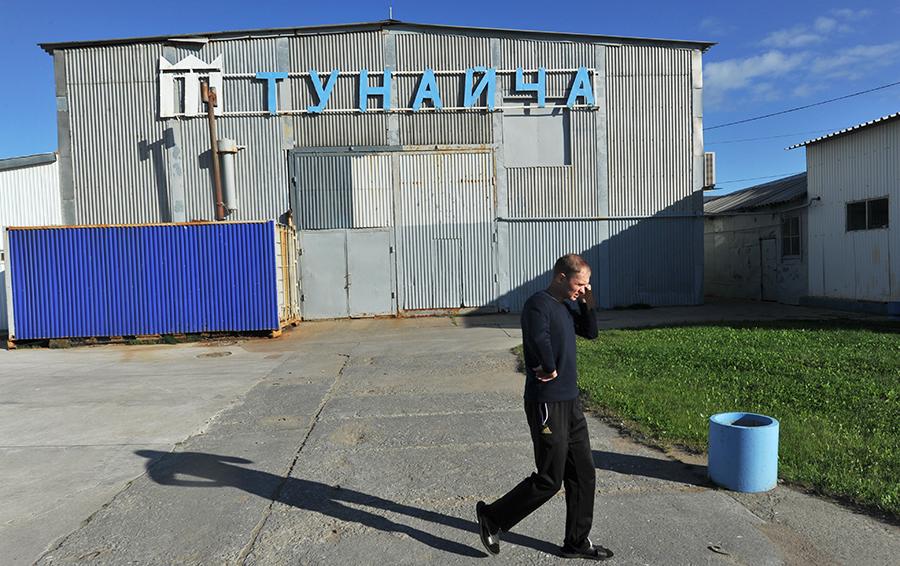 Переработка длилась на «Тунайче» 30-40 дней, за сезон рабочие получали 80 000 — 150 000 рублей