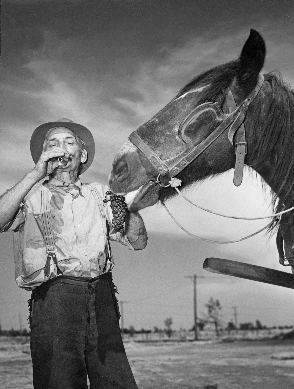 Благоприятный климат и упорный труд переселенцев сделали Австралию винодельческим раем