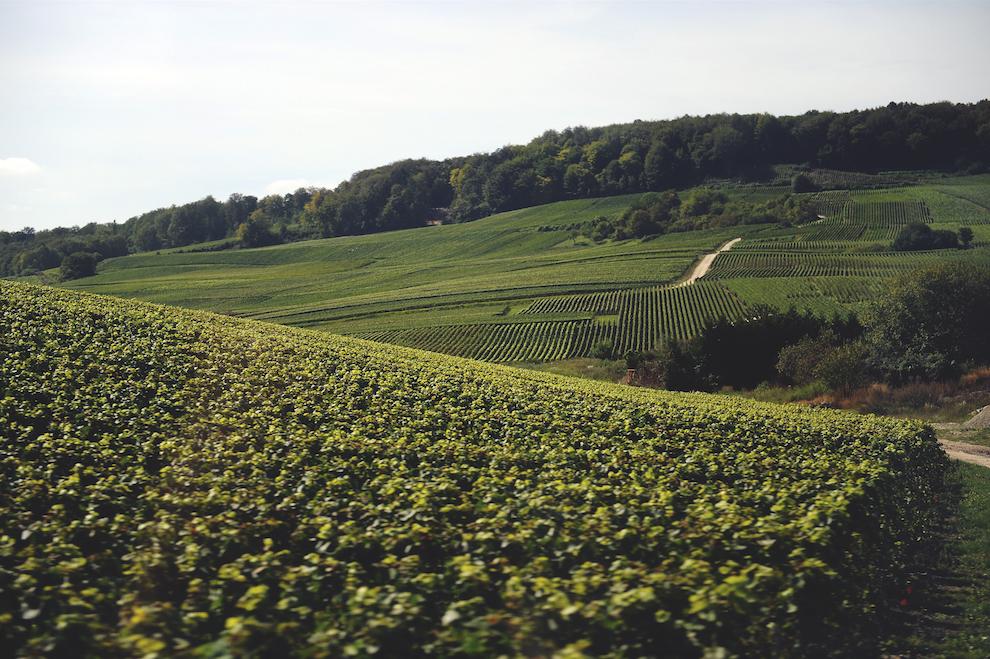 Виноградные поля Шампани