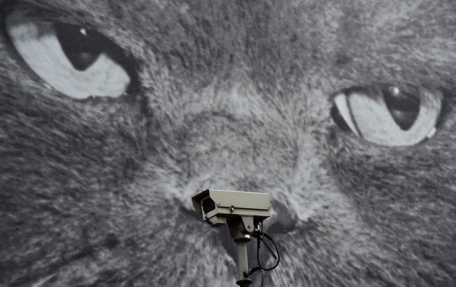Цифровая идентичность: почему об ограничении анонимности в интернете должен задуматься каждый