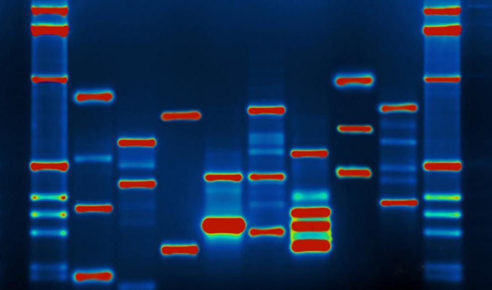 Элитная флешка: станет ли ДНК альтернативным носителем информации?