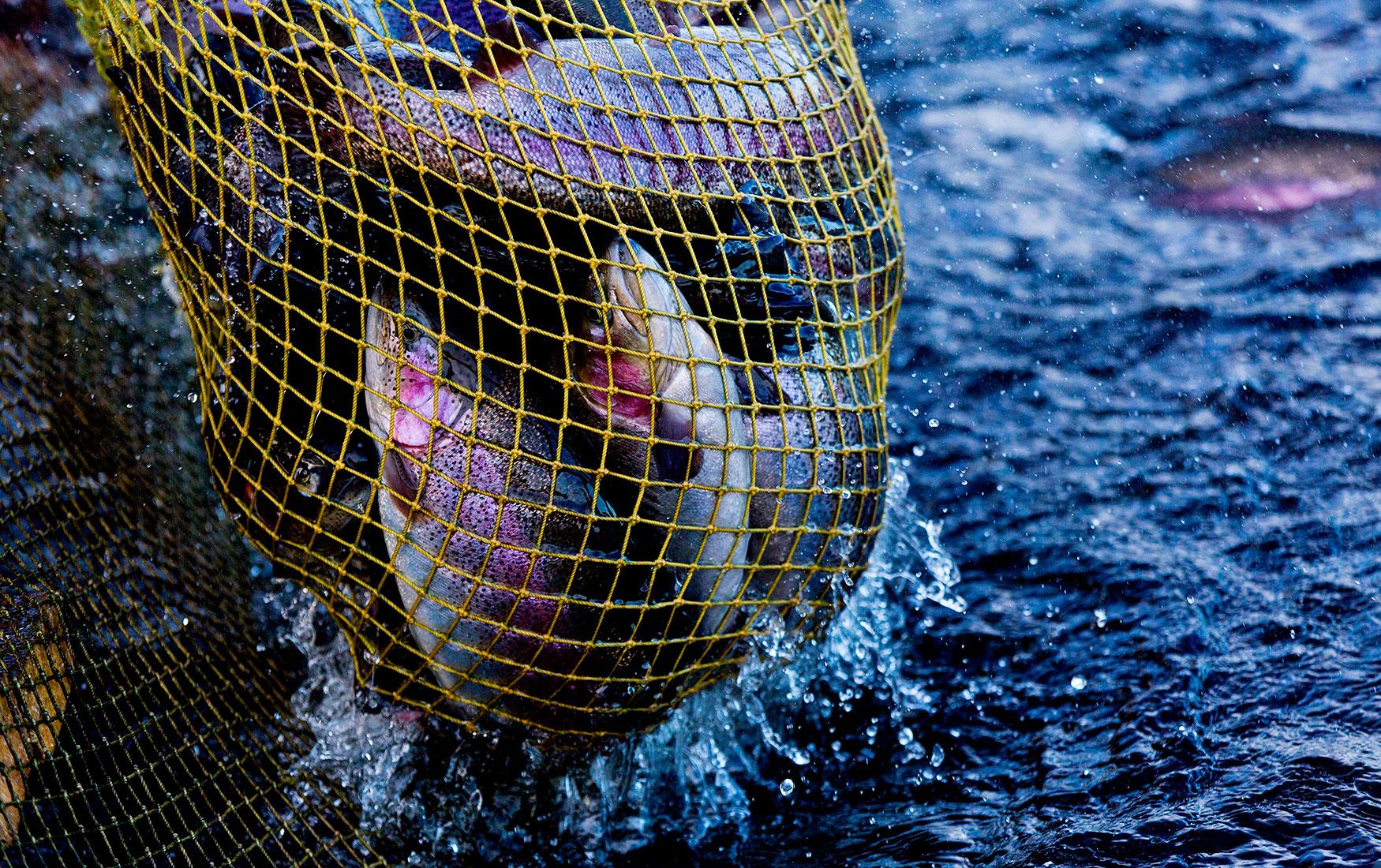 Китайский берег. Как программа рыбного импортозамещения уплыла за горизонт