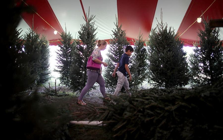 Бизнес на новогодних елках. Как построить процветающую компанию, работая месяц в год