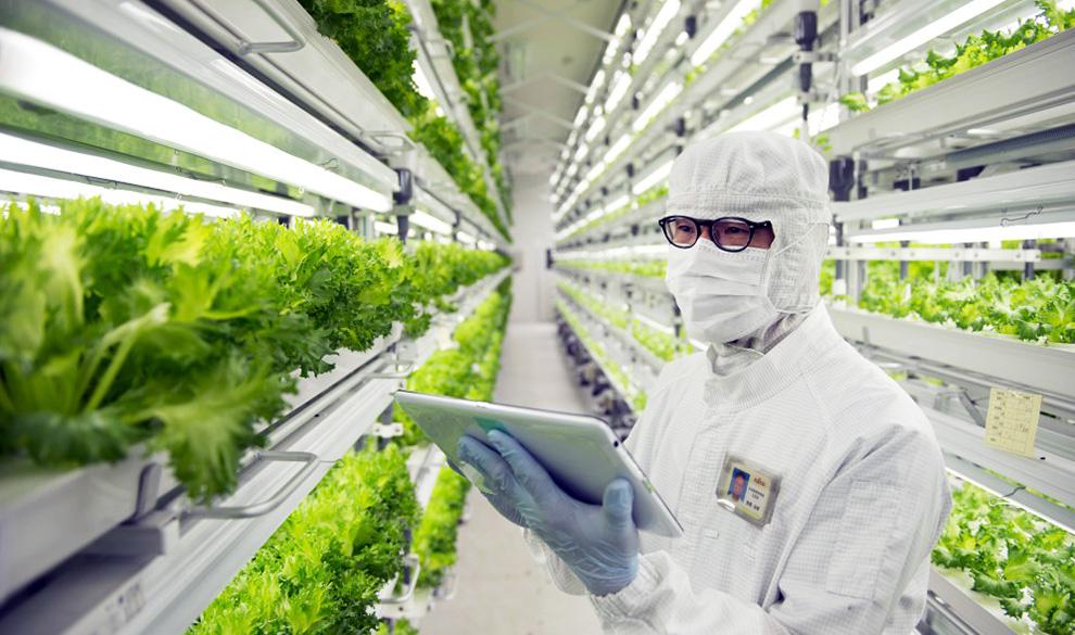 Уход в «цифру»: что заставляет Fujitsu выращивать салат
