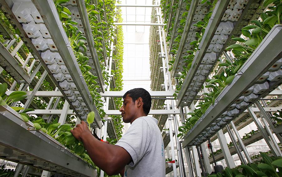 Заройте ваши денежки: богатейший японец, Безос и Шмидт вложили $200 млн в умные фермы